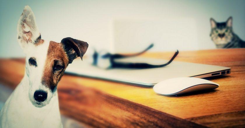 Pet Friendly Apartments Cluj