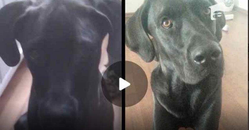 Labrador împuşcat pe stradă de un orădean