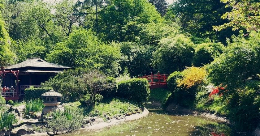 "Grădina Botanică ""Alexandru Borza"" cluj"