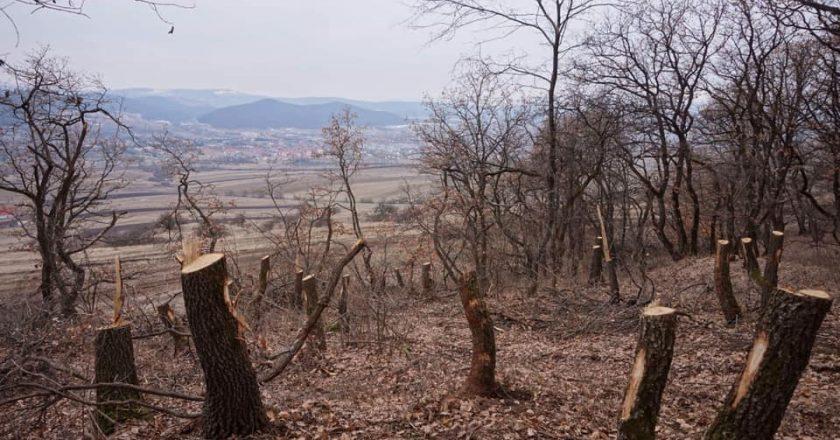 Pădurea Hoia-Baciu din Cluj e pusă pe foc