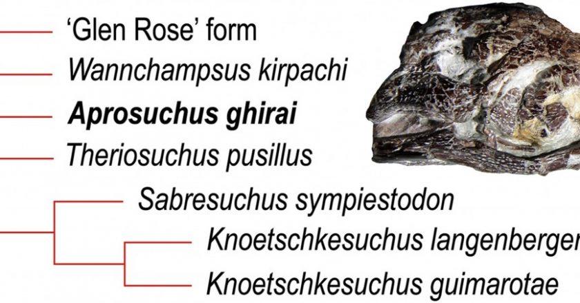 Cercetătorii UBB Cluj au descoperit o nouă specie de crocodil în Bazinul Hațeg