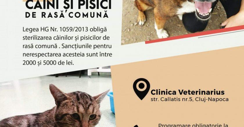 Arca lui Noe organizează la Cluj o campanie de sterilizări gratuite pentru câini şi pisici