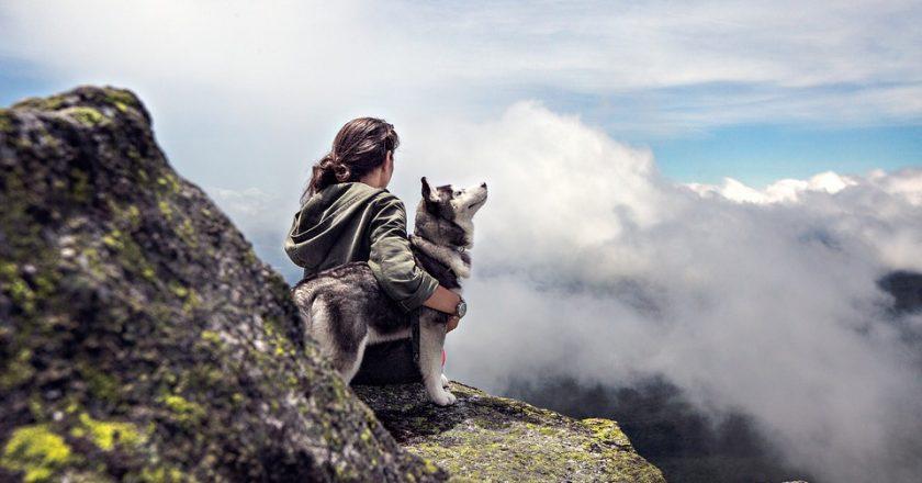 Top cele mai vechi rase de câini din lume