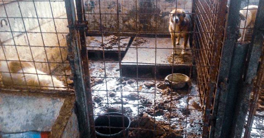 Manifestare mâine la Cluj pentru salvarea a 1000 de câini ţinuţi într-un adăpost de la marginea oraşului