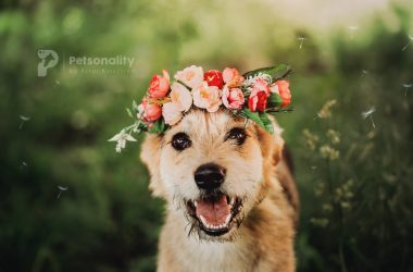Proiectul inedit prin care o fotografă din Cluj a reuşit să revoluţioneze adopţiile de căţei şi pisici