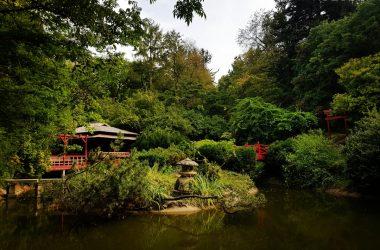 Peste 300 de voluntari vor participa la o campanie de ecologizare și de plantare la Grădina Botanică Cluj