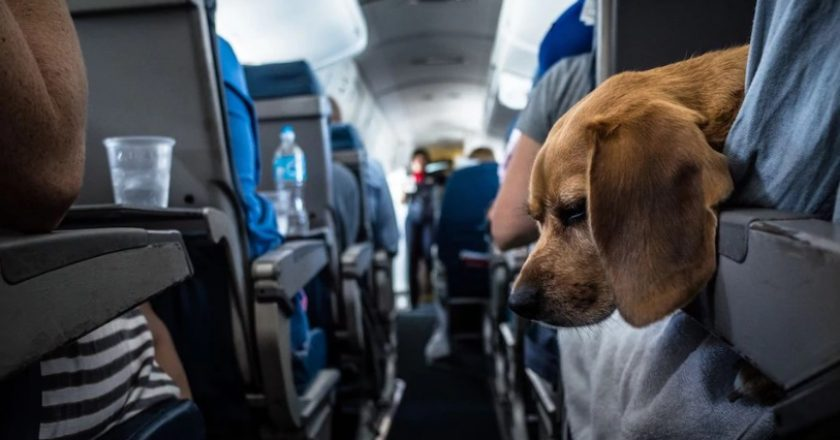 Veste bună pentru iubitorii de animale: acestea au voie să intre în Aeroportul Cluj-Napoca