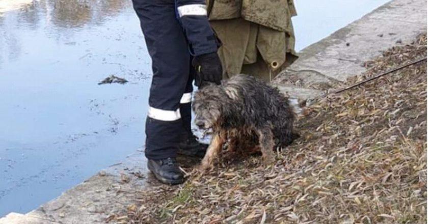 Cluj: Caine salvat de pompieri din apele îngheţate ale Someşului