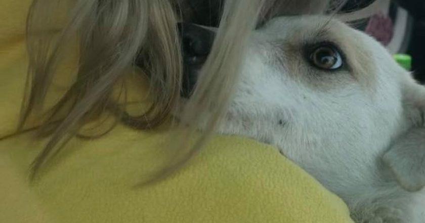 Poveste cu final fericit la Cluj: căţeluşa abuzată sexual are un nou cămin