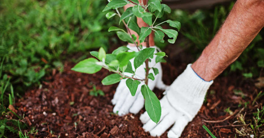 O facultate din Cluj va planta 507 de copaci după ce studenţii săi au obţinut 507 de note de 10 în sesiune
