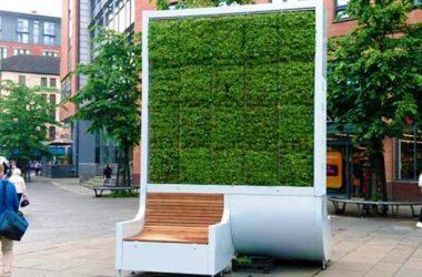 """Primăria Cluj-Napoca va cumpăra """"copaci urbani"""" pentru a reduce poluarea din oraş"""
