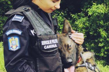 Oficial: Va fi înfiinţată Poliţia Animalelor în România