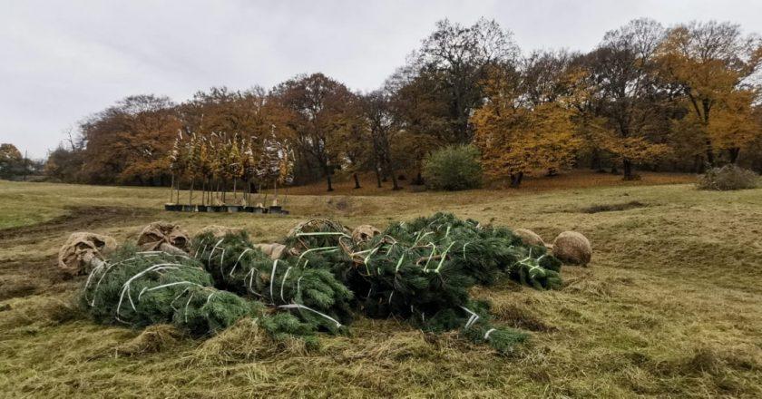 A început revitalizarea și extinderea Parcului Etnografic din Cluj-Napoca