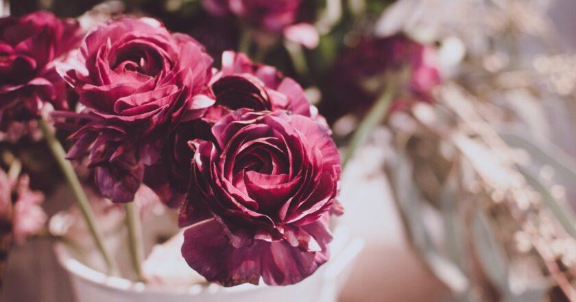 Știai de ce este bine să dăruiești buchete cu flori mov? Iată motivele noastre