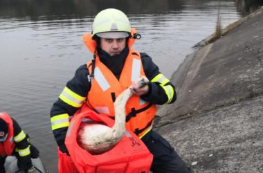 Lebădă salvată de pompierii clujeni