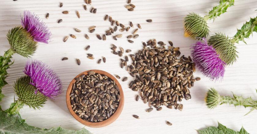 Care sunt beneficiile silimarinei pentru organism?