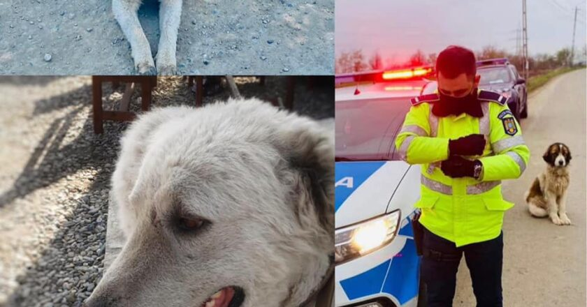 Adrian Hoza - poliţistul din Cluj care îşi dedică timpul salvării animalelor