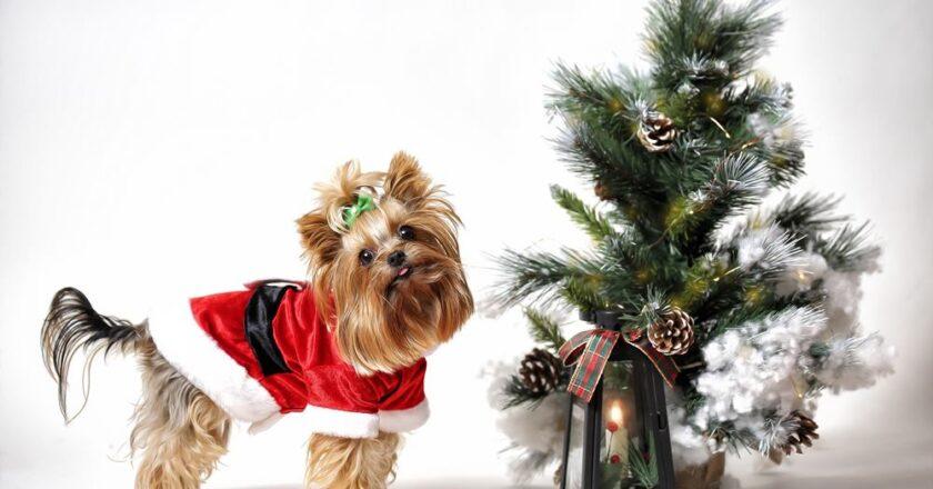 Trei idei atractive de decorare a bradului de Crăciun